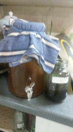 My first ferment kombucha